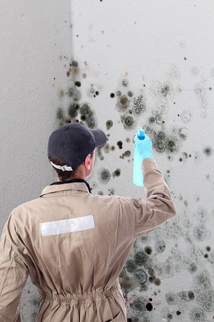 Expert en sinistre pour nettoyage de moisissure