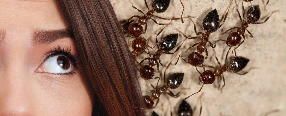 Pourquoi faire appel si vous avez des fourmis charpentières à un exterminateur?