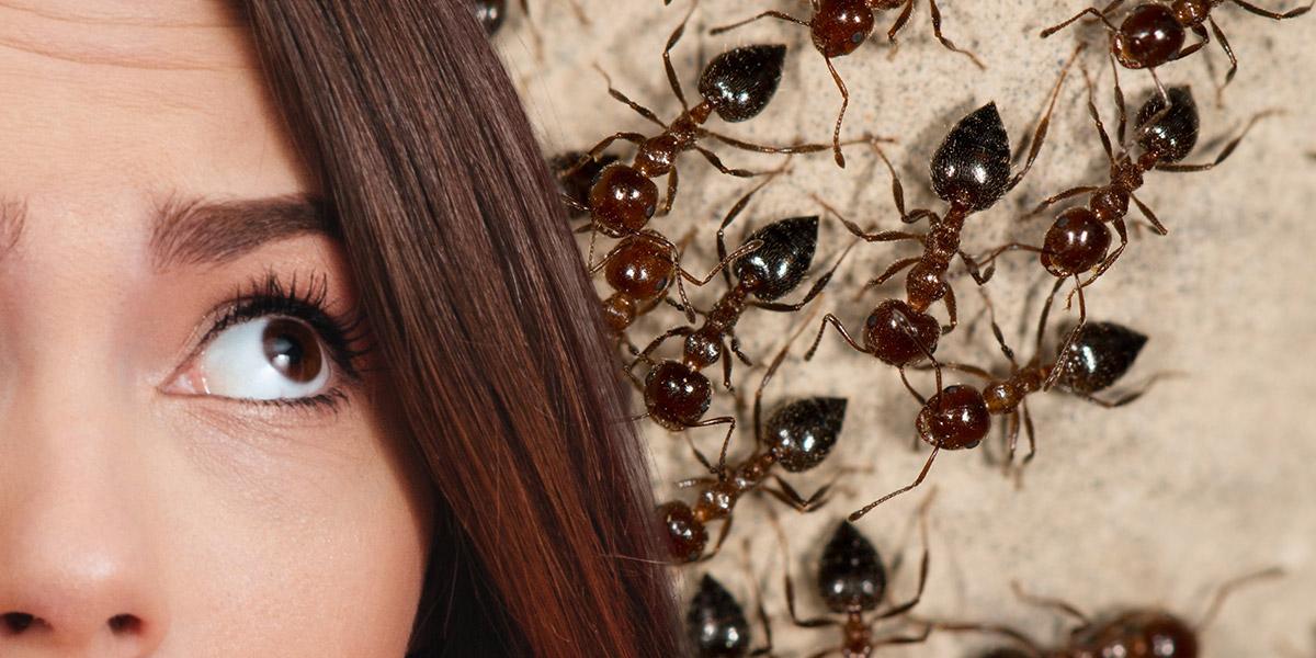 exterminer fourmis dans la maison ventana blog. Black Bedroom Furniture Sets. Home Design Ideas