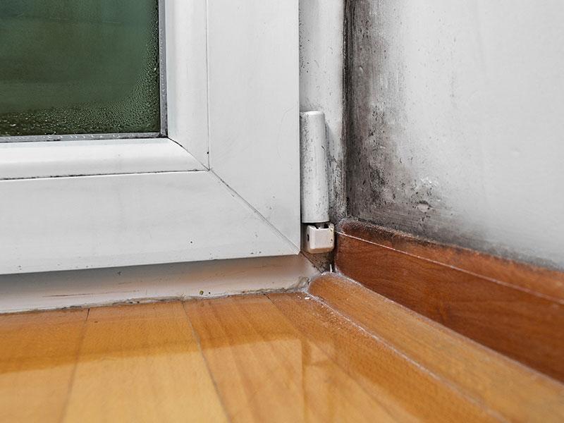 Faites circuler l'air dans votre sous-sol pour éviter les moisissures.