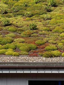 Un toit blanc ou vert est une idée géniale pour l'environnement grâce à une toiture pleine de vie.