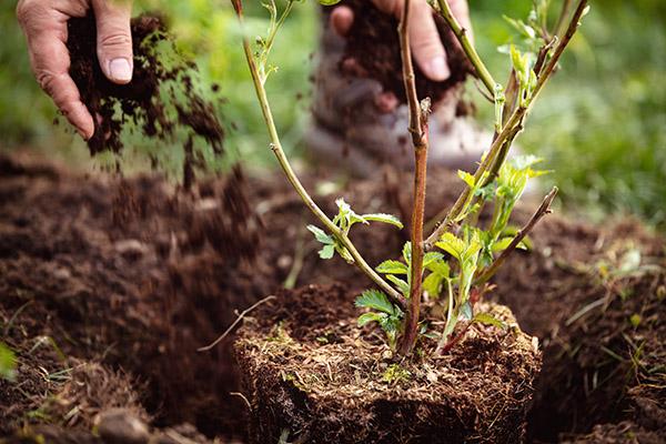 services-horticulteurs-paysagistes-entretien-jardins-vegetaux
