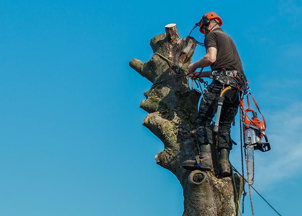 elagage-arbre-malade-securite-eclaircir-prevenir.