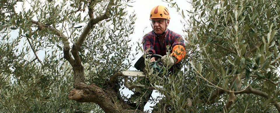 services-elagueur-emondeur-coupe-entretien-arbres