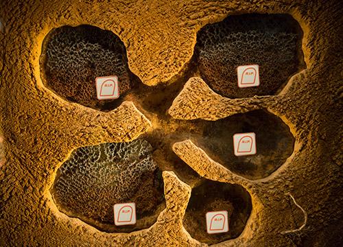 6-trucs-pratiques-pour-enlever-un-nide-de-fourmis