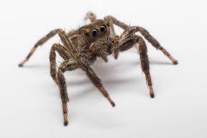exterminateur-araignee