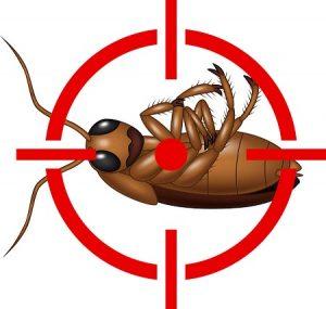 extermination-coquerelles-cafards-