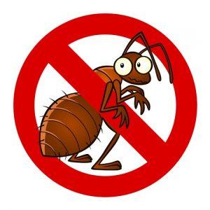 extermination-de-fourmis