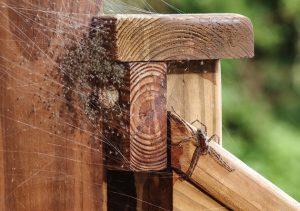 infestation-araignees-maison