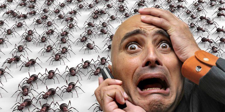 les-fourmis-chez-vous-faute-a-qui-au-quebec
