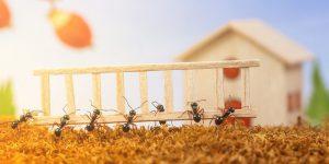 les-fourmis-envahissent-votre-maison-quoi-faire-